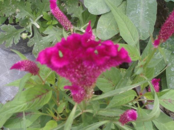 Flowers like velvet