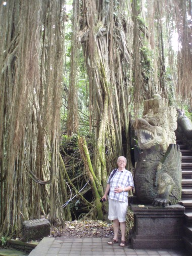 Corky and a humongous tree in the Monkey Forest