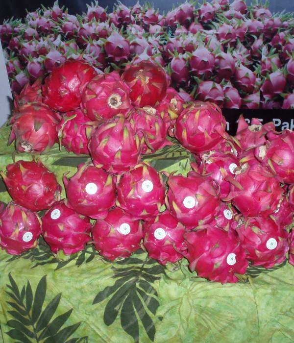 Heap of dragon fruit