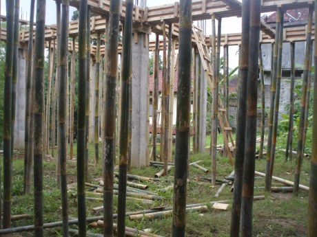 A number of bamboo supports