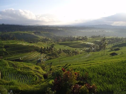 Stunning rice terrace view