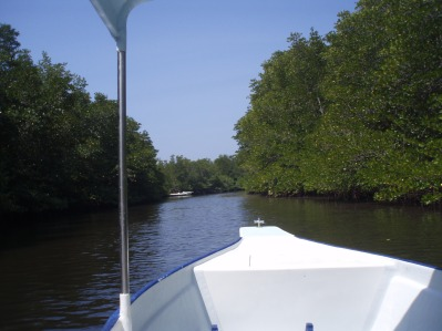 Taking a boat through the mangroves