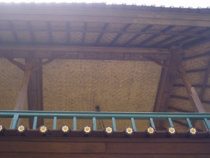 Looking up at the row of Jepuns lining my roof