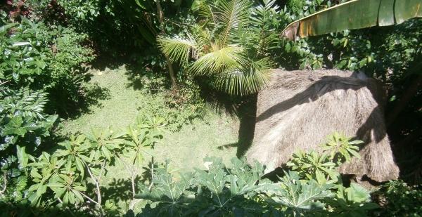 Garden from my balcony