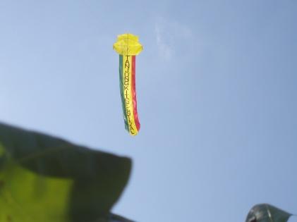 Reggae kite