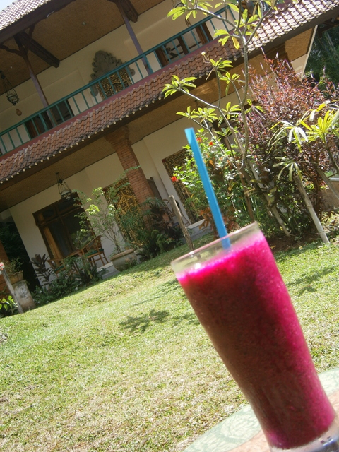 Dragon Fruit Juice for breakfast in my garden