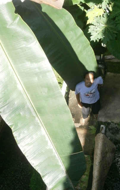 Yaniq and the giant leaves