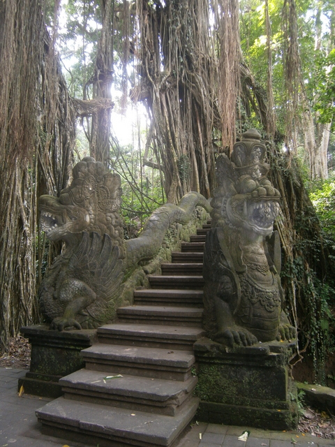 Tree covered steps