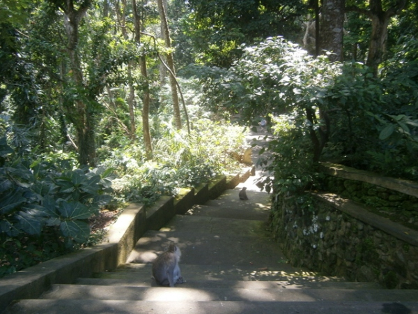Beautiful shaded pathways