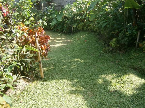 A ripe garden
