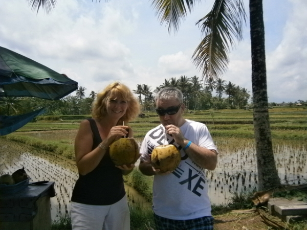 Drinking from coconuts in the rice fields