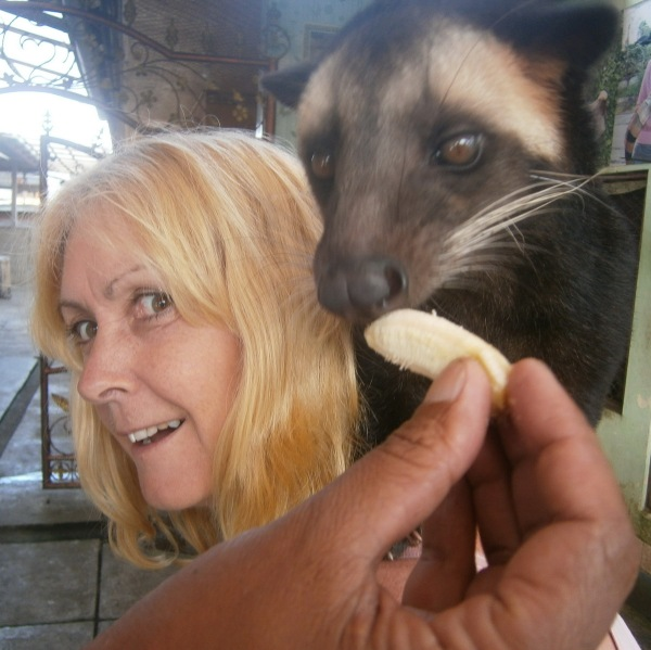 A hungry Luwak - but no coffee today!