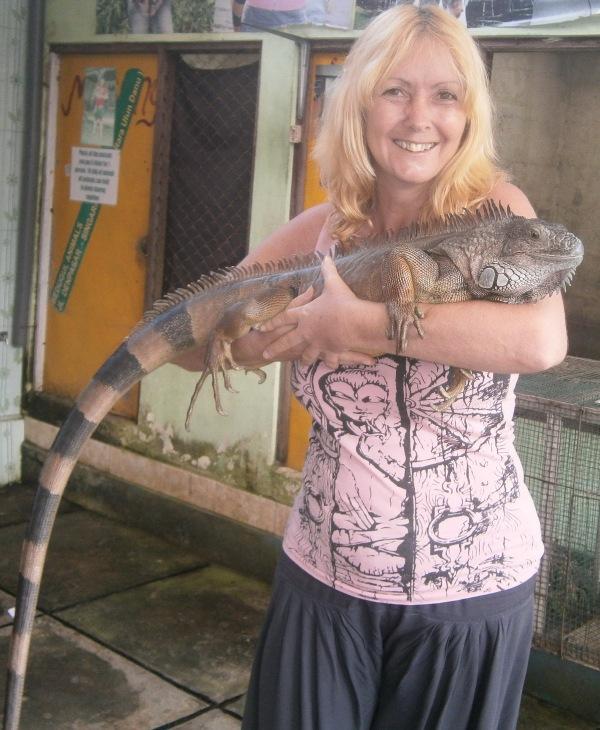 Fully grown iguana